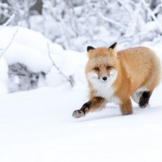 """Fox"" News"