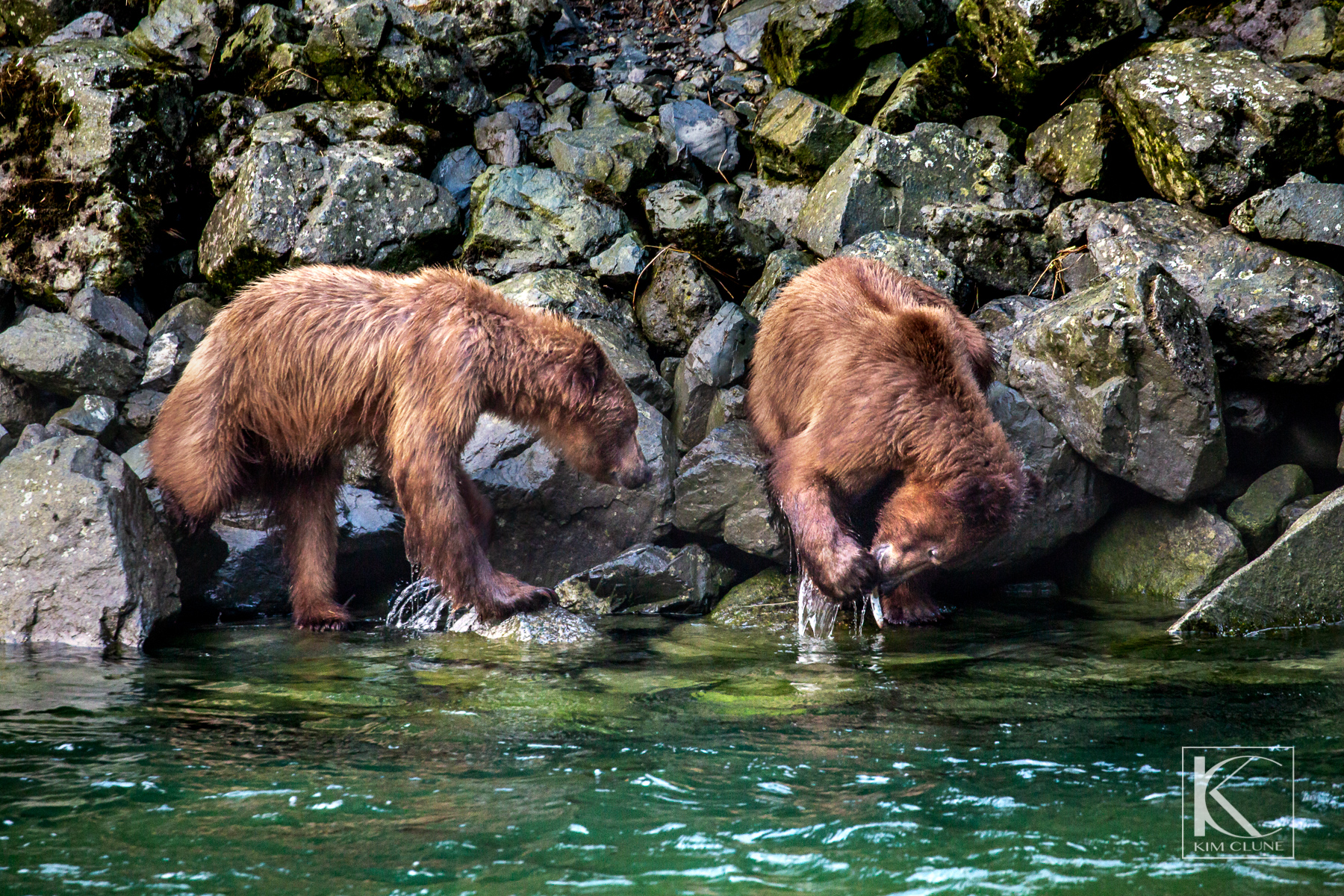Haines Alaska Wildlife Tours